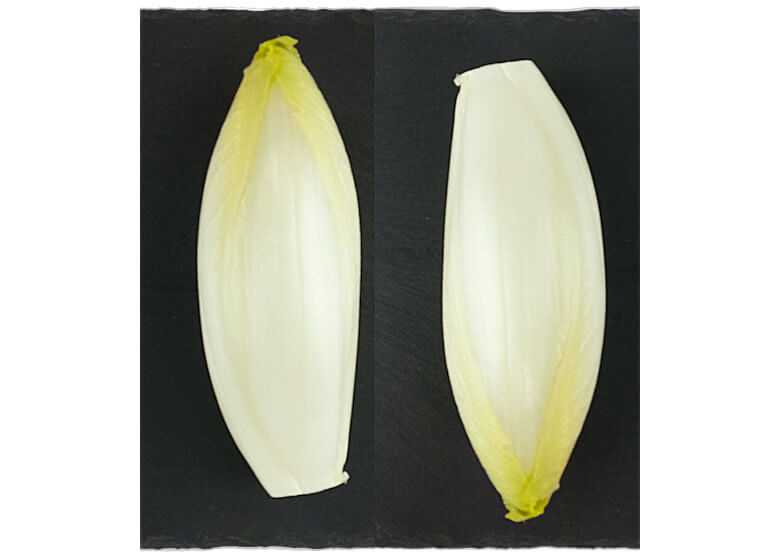 Picture of Belgian Endive